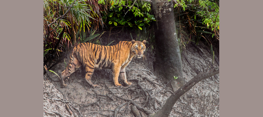 sundarban_tour_package_boat