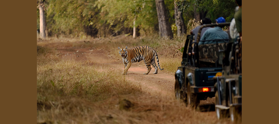 jeep_safari_booking_in_jim corbett
