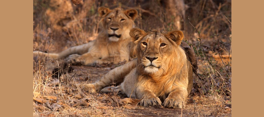 gir_national_park_best_time_to_visit