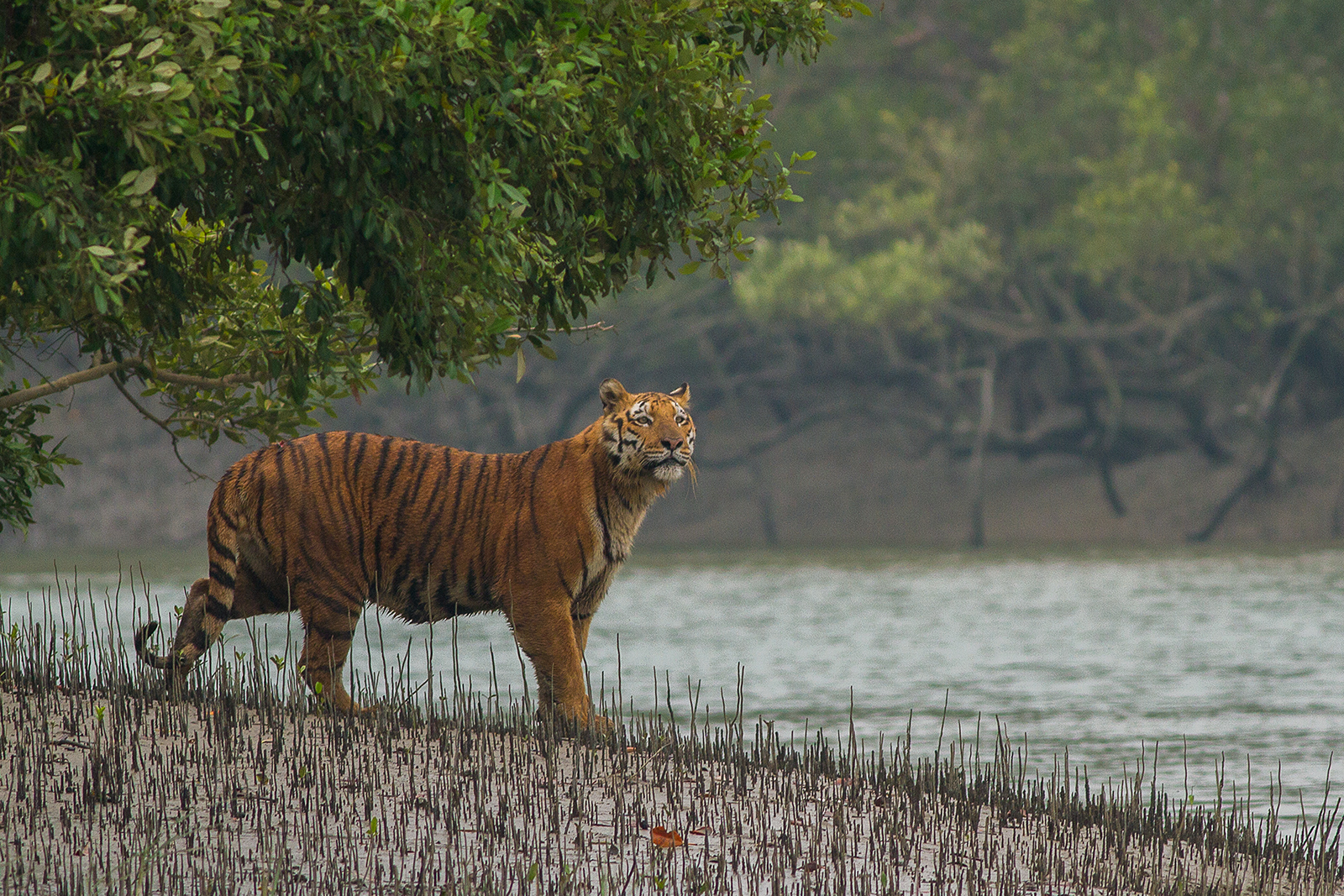 North East India Bird Watching Tour