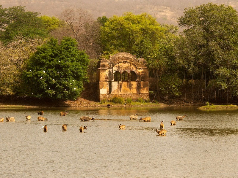 rajasthan_tours_and_travels