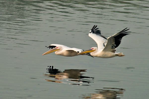 Special North India Bird & Wildlife Tour for Disabled & Elderly (18 Days; # 123)