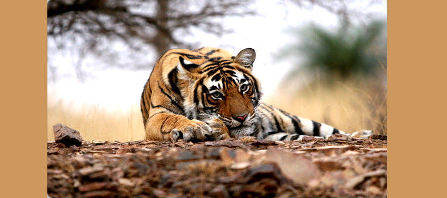 all_india_tour_packages_prices