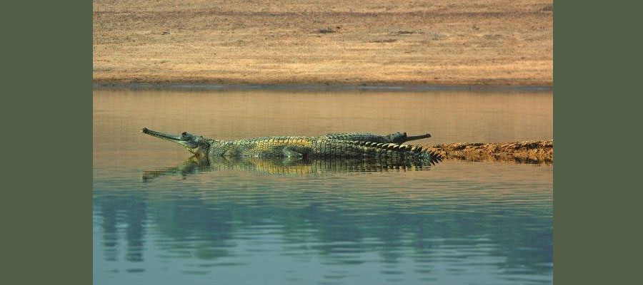 wildlife_photography_camps_in_india