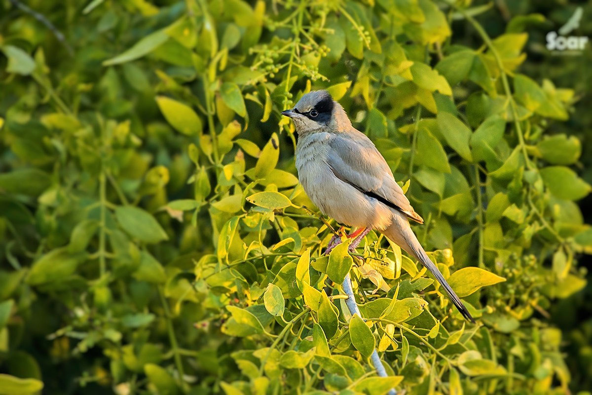 Gujarat Birding & Wildlife Tour (14 Days; # 110)