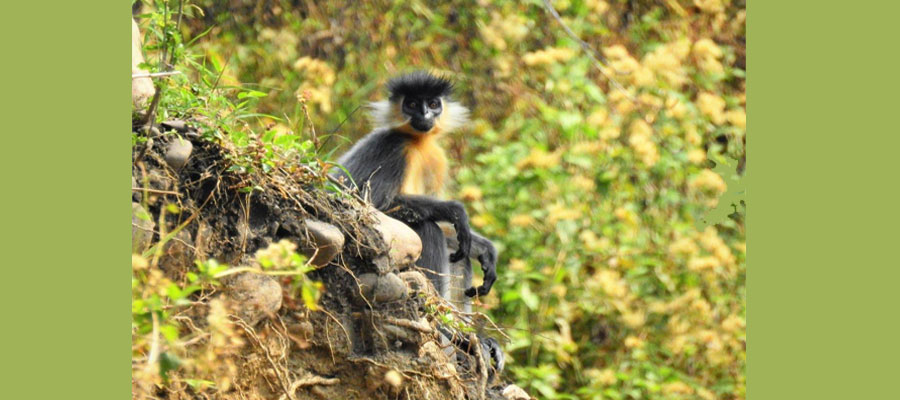 jeep_safari_cost_in_manas_national_park