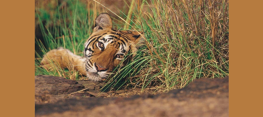 nature_and_wildlife_tours