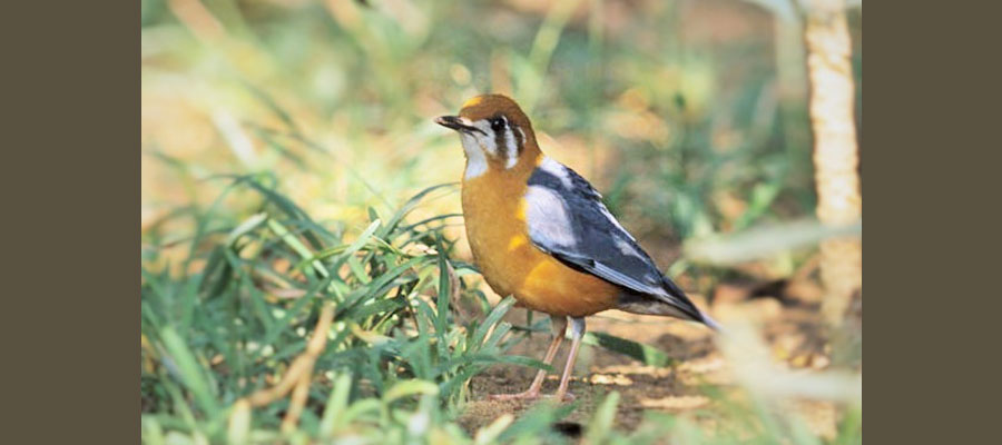 bird_watching_tours_india