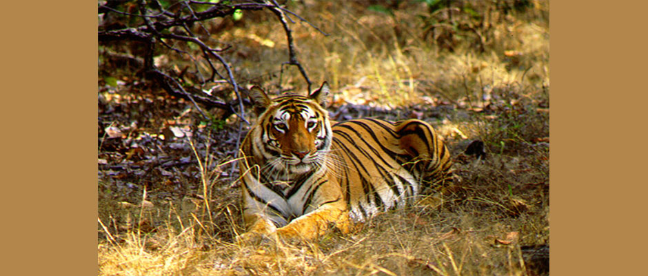 tiger_reserves_in_india