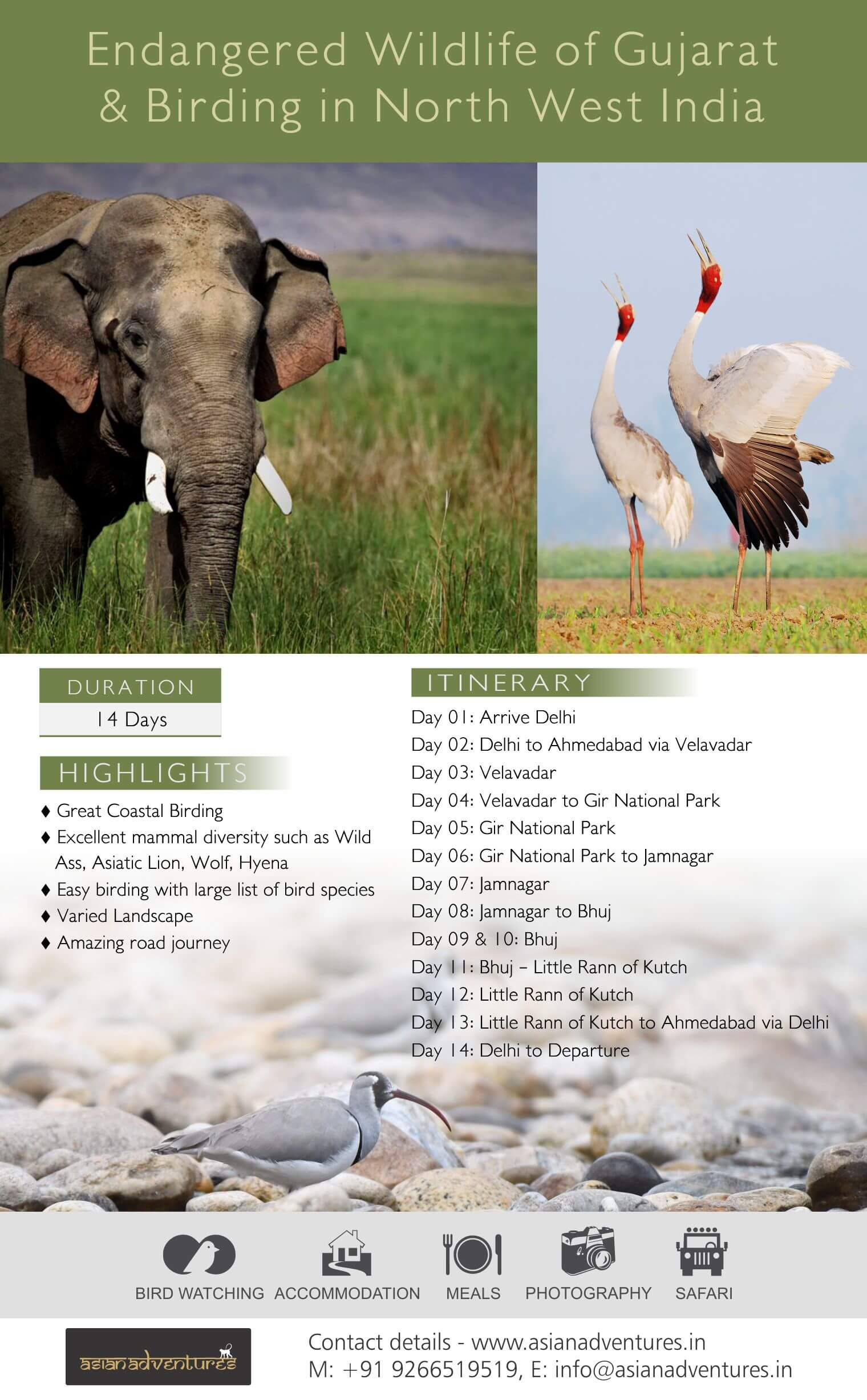 endangered_wildlife_of_gujarat_and_birding_north_east_india