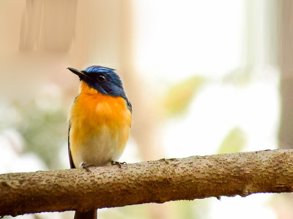 Birding In Pench
