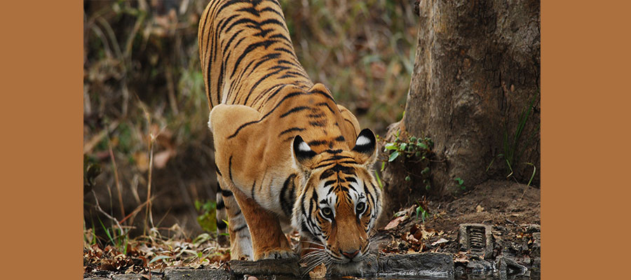 pench_national_park