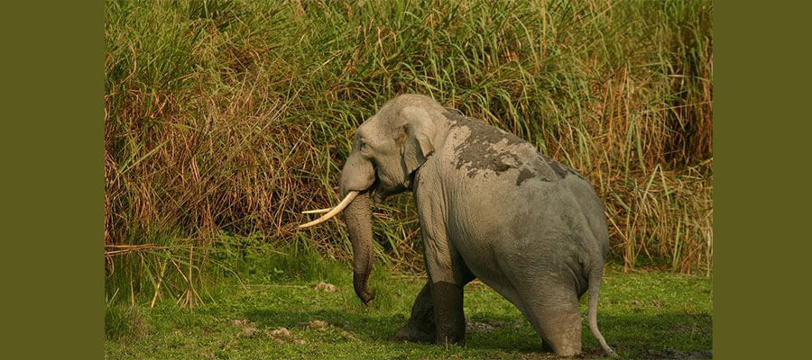 wildlife_tour_packages_in_kerala