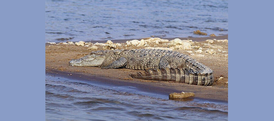 chambal_tour_packages