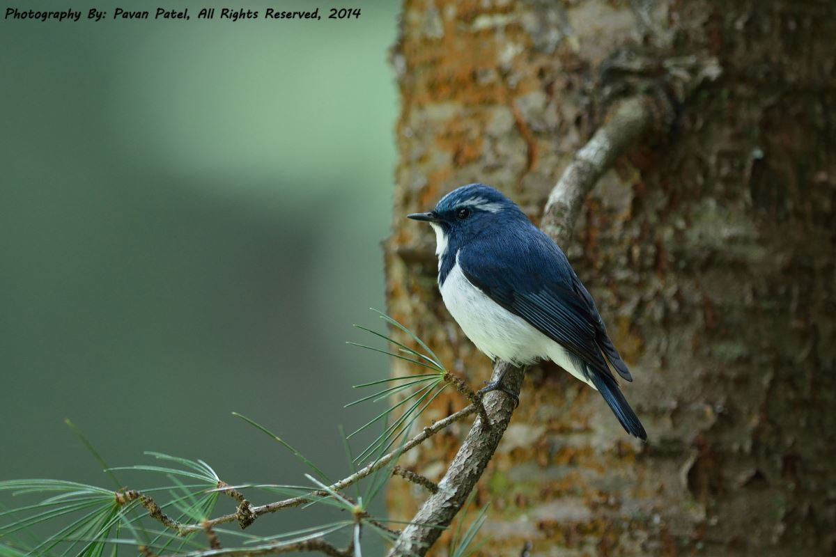 Birds of Dehradun And Chopta (06 Days; # 755)